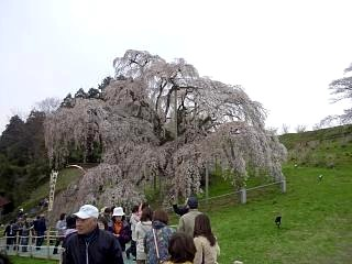 20130420三春滝桜(その5)