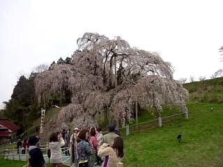20130420三春滝桜(その6)