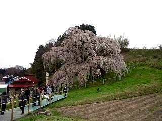 20130420三春滝桜(その8)
