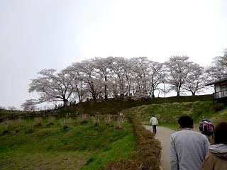 20130420三春滝桜(その9)