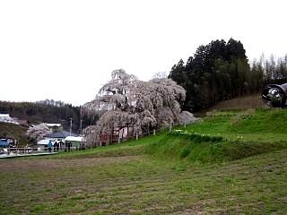 20130420三春滝桜(その10)