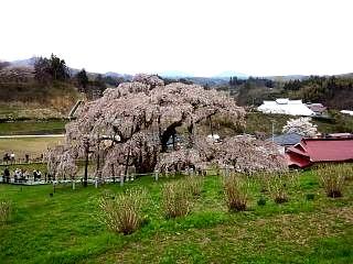 20130420三春滝桜(その12)