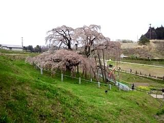 20130420三春滝桜(その20)