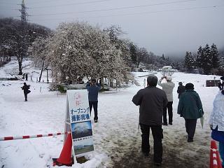 20130421石部桜(その2)