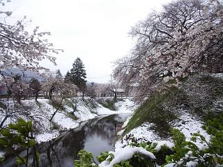 20130421鶴ヶ城(その3)