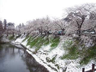 20130421鶴ヶ城(その8)