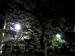 20130627夜桜(その3)