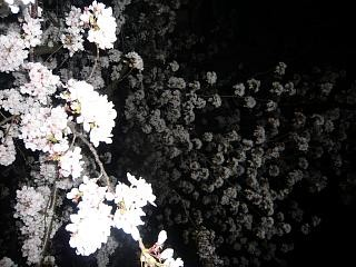 20130627夜桜(その6)