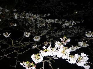 20130627夜桜(その8)
