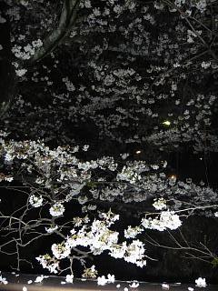 20130627夜桜(その9)