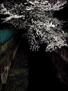 20130627夜桜(その23)