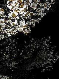 20130627夜桜(その24)