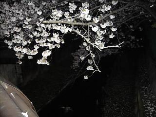 20130627夜桜(その25)