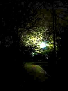 20130627夜桜(その29)