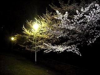 20130627夜桜(その31)