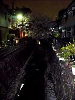 20130627夜桜(その37)