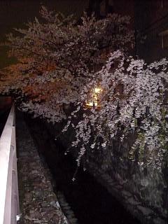 20130627夜桜(その40)