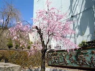 20130413桜(その10)