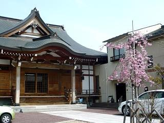 20130414近所の桜(その3)