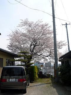 20130414近所の桜(その8)
