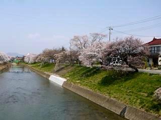 20130414逢瀬川の桜(その2)