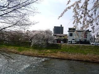 20130414逢瀬川の桜(その4)