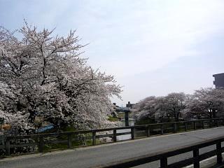 20130414逢瀬川の桜(その13)