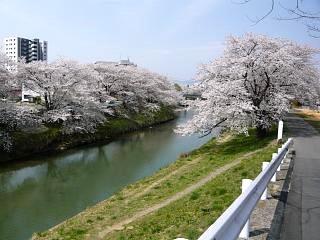 20130414逢瀬川の桜(その21)