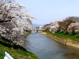 20130414逢瀬川の桜(その25)