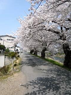 20130414逢瀬川の桜(その32)