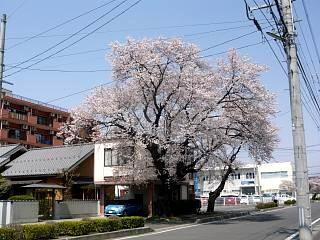 20130414逢瀬川の桜(その48)