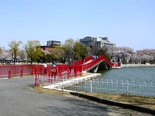 開成山公園・大神宮の桜(その42)