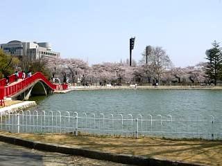 開成山公園・大神宮の桜(その43)