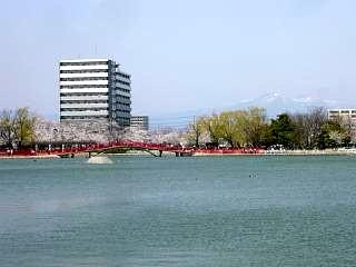 開成山公園・大神宮の桜(その45)