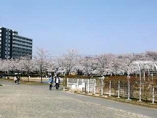 開成山公園・大神宮の桜(その58)