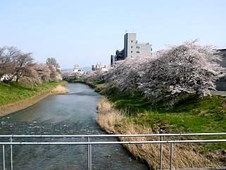郡山女子大・逢瀬川桜(その16)