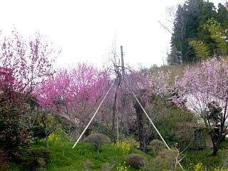 20130420三春滝桜(その25)