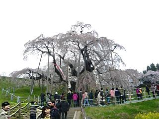 20130420三春滝桜(その26)
