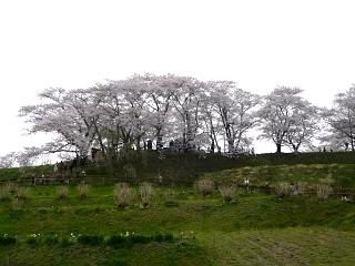20130420三春滝桜(その30)