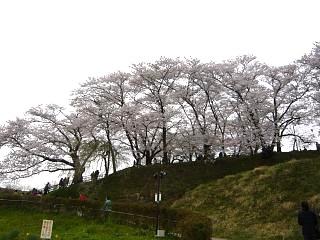 20130420三春滝桜(その32)