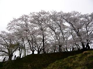 20130420三春滝桜(その33)