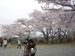 20130420三春滝桜(その35)