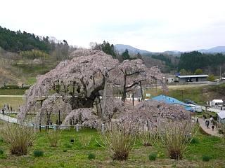 20130420三春滝桜(その38)