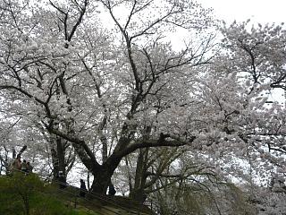 20130420三春滝桜(その39)