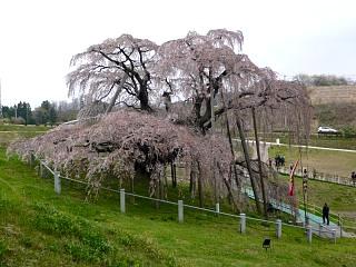 20130420三春滝桜(その40)