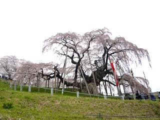 20130420三春滝桜(その41)