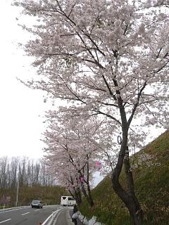 20130420三春滝桜(その42)