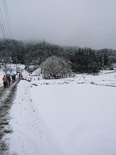 20130421石部桜(その14)