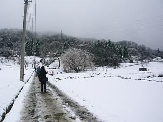 20130421石部桜(その15)