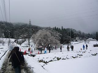20130421石部桜(その26)